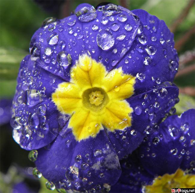 Такие цветы растут у озера