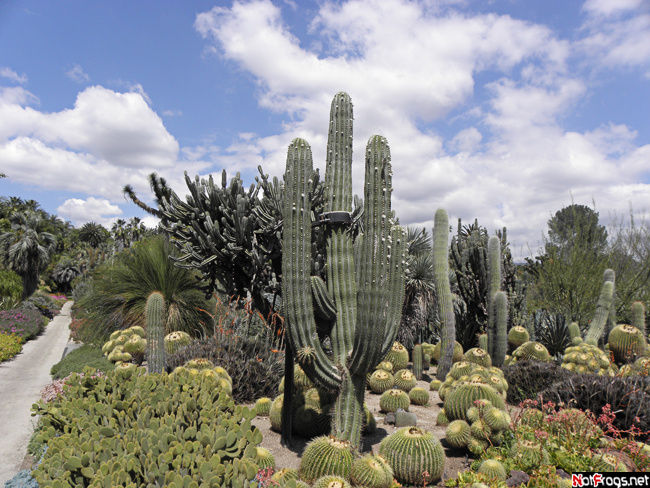 Вид на одну из аллей кактусов