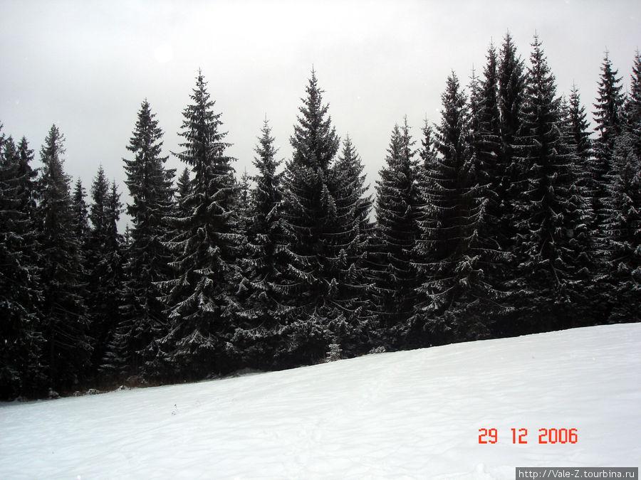 лес как в сказке