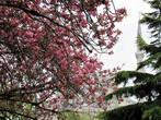 Я бы не сказала, что Стамбул зеленый город, но его цветы способны погрести под собой даже громаду Голубой мечети.