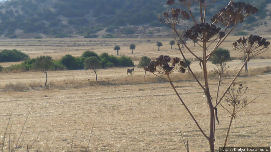 Вот такие пейзажи  по пути на мыс Карпаз