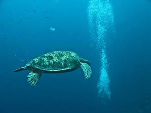 А вот и черепахи.