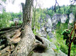 Деревья пустили корни прямо на камнях...