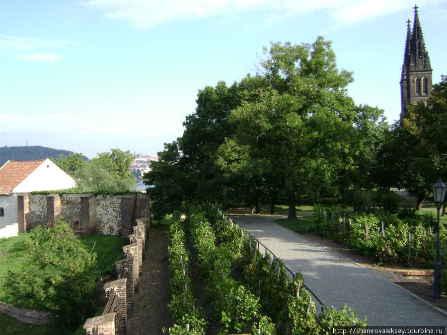 Виноградник на южной стороне Вышеграда