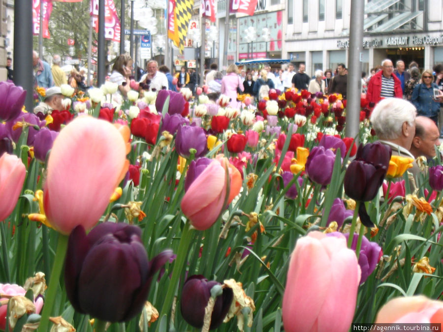 Весной Кауфингерштрассе вся в тюльпанах