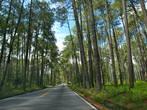 Лес почти как в России