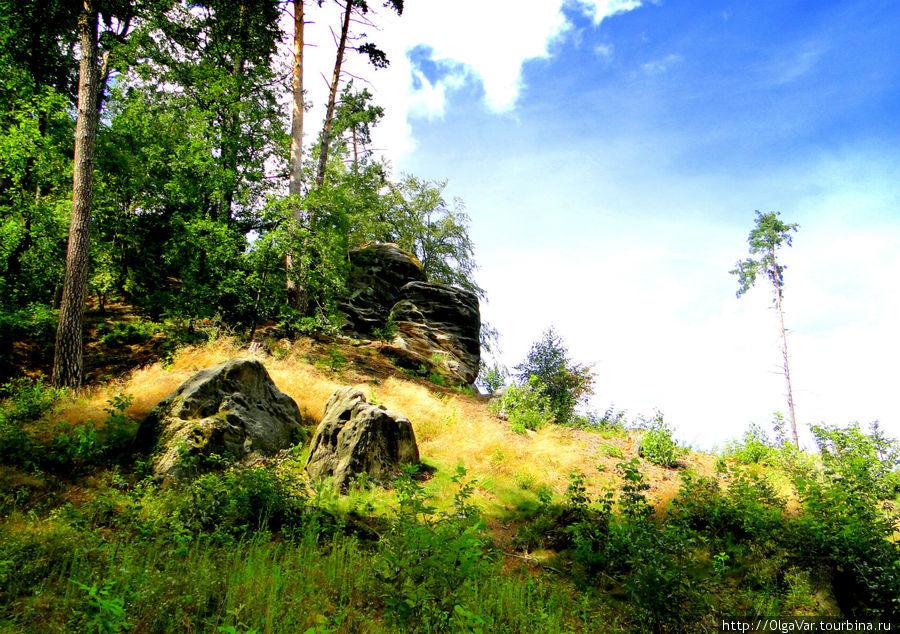 Пршивышина — на опушке леса