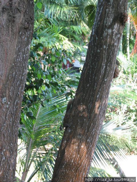 белочка на дереве на территории отеля