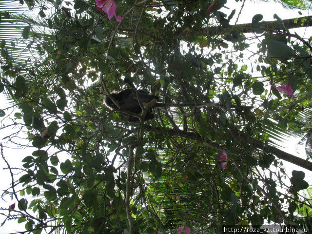 обезьяна на дереве над бассейном