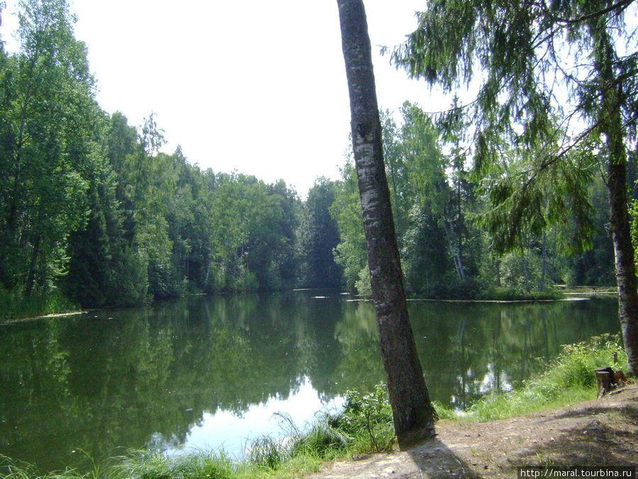 Островок посредине пруда