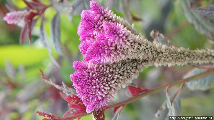 Красивый цветок . Не знаю названия. Встречаю впервые