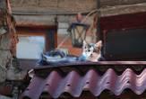 Античная кошка:)