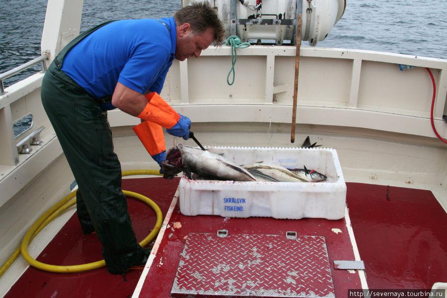 Кнут почистил всю рыбу сам