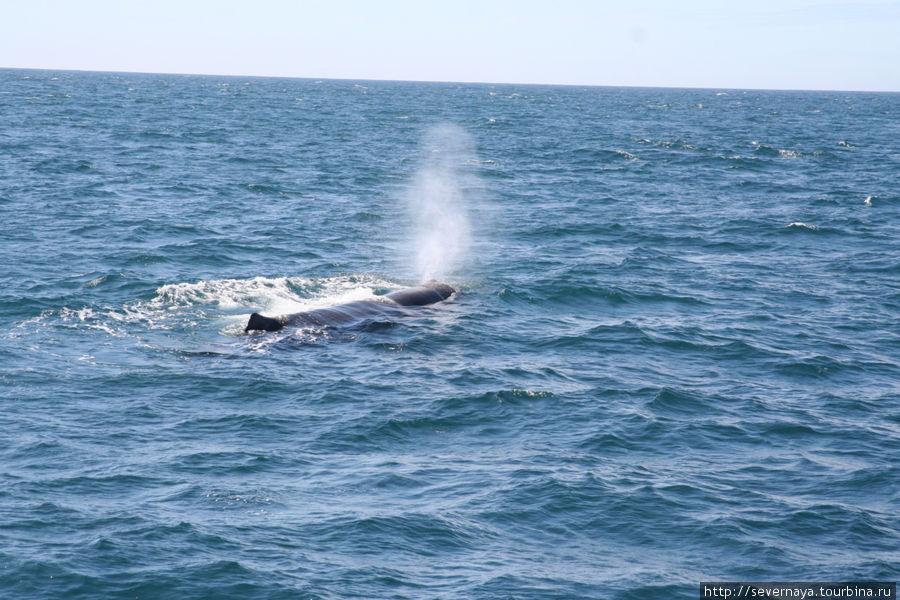 Китовое сафари в Анденесе
