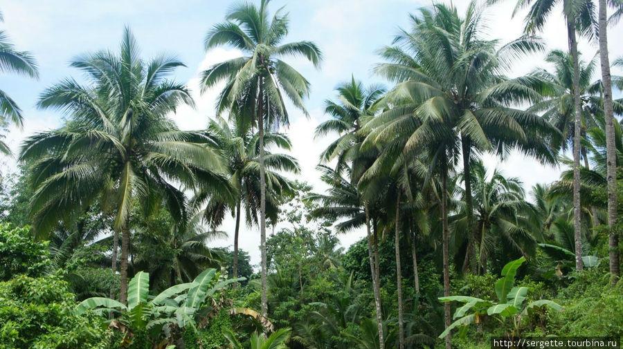 Вдоль дороги Думагете, Филиппины