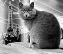 Липецкий мечтатель о Париже