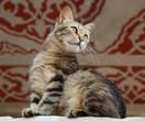 Мусульманский кот (В одной из мечети Стамбула)