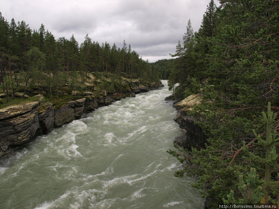 Река Шоа. Из-за дождей она стала мутной и очень полноводной. Обычно она прозрачная и очень чистая.