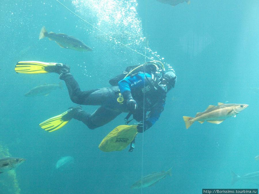А это кормление рыбы в большом аквариуме.