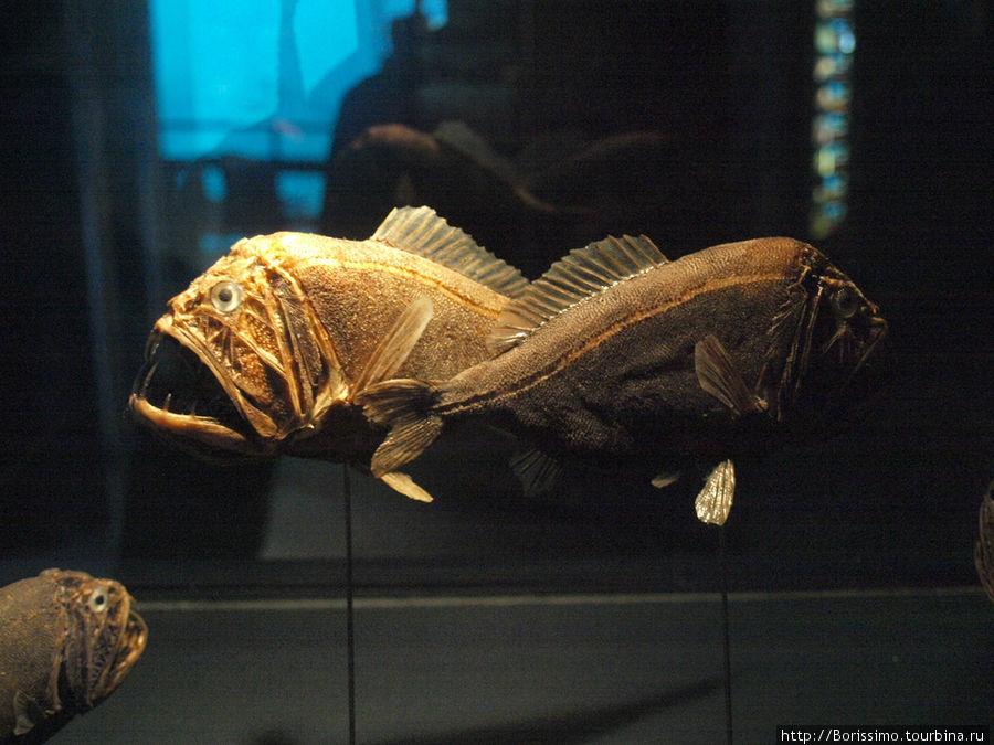 А эти чудища обитают в холодных глубинах океана, куда не долетают солнечные лучи.