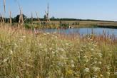 А недалеко от села есть пруды, где выращивают карасей и карпов. Мы поехали туда на рыбалку.