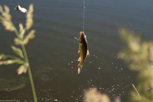Рыба ловится быстро и просто