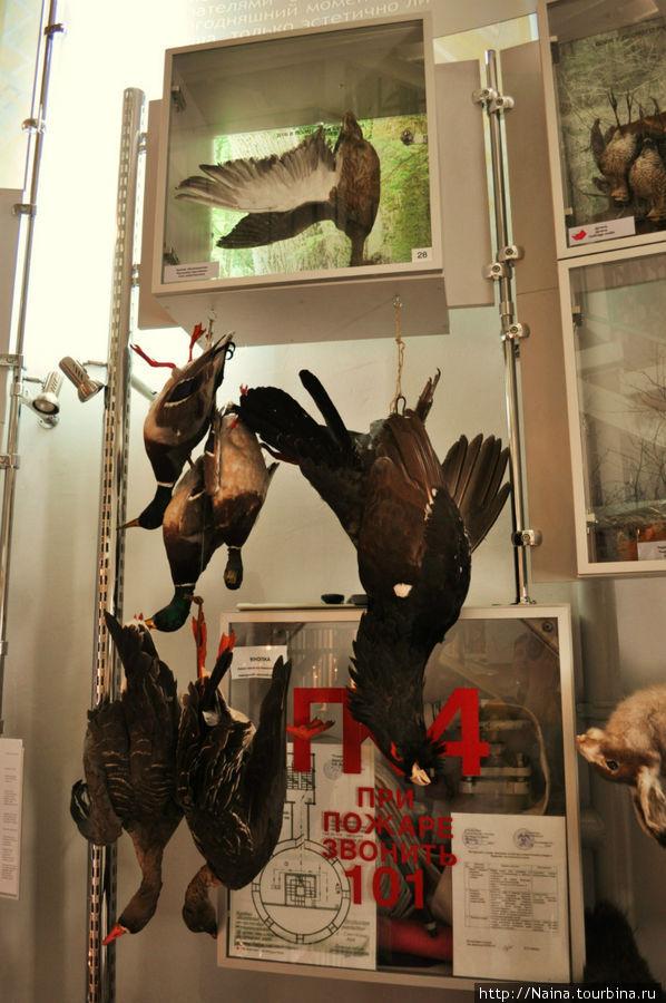 Эта и следующая фотография — фотографии экспозиции на 1 этаже музея. В течение многих веков люди охотились для пропитания. Теперь многие охотятся для забавы и пополнения собственных коллекций охотничьих трофеев. Согласитесь, такие коллекции не только неэстетичны. Они ужасны.