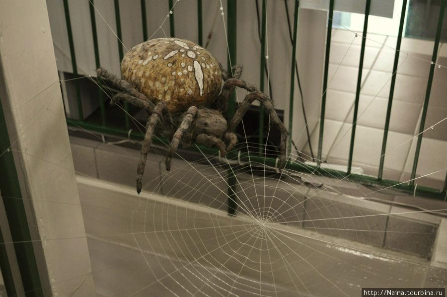 Макет паутины паука-крестовика прямо на винтовой лестнице, 4 этаж.