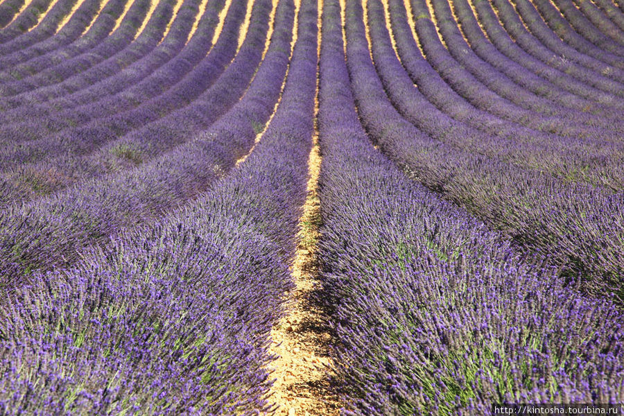 Лавандовые поля Валансоля Прованс-Альпы-Лазурный берег, Франция