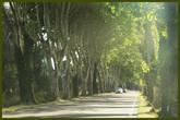 l'autoroute D99 — между Сан-Реми и Майан