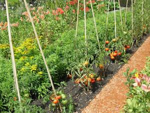Увидеть в таком месте помидоры — даже как-то экзотично...