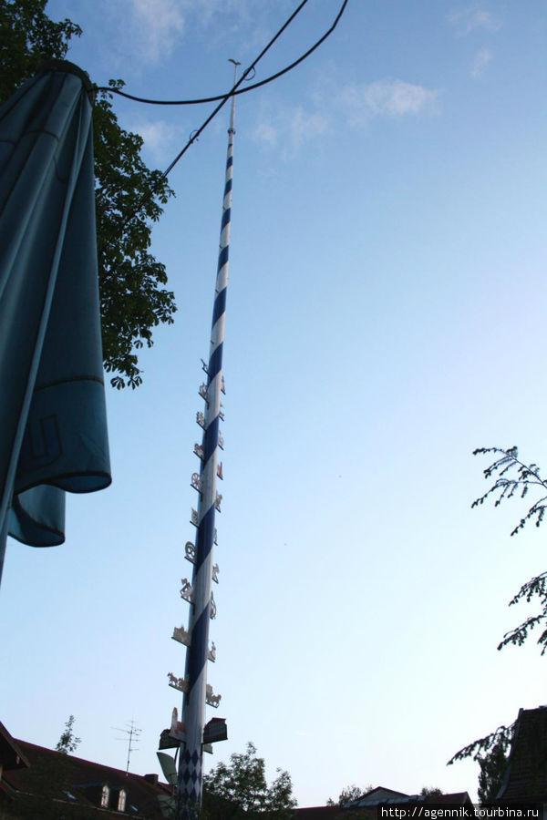 Майское дерево — одна из главных примет биргардена