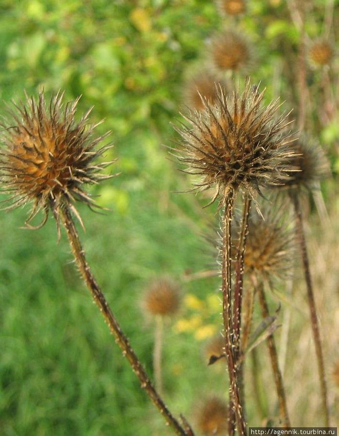 Траву на полях летом не косят
