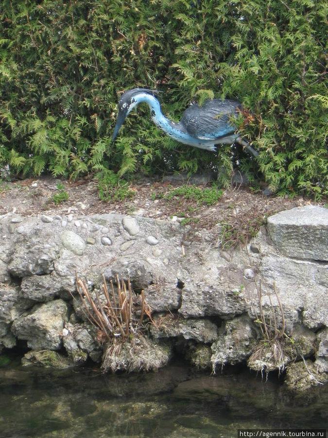 Синяя птиуа