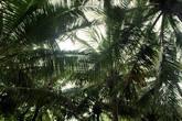 Небо в кокосиках