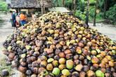Горы кокосиков