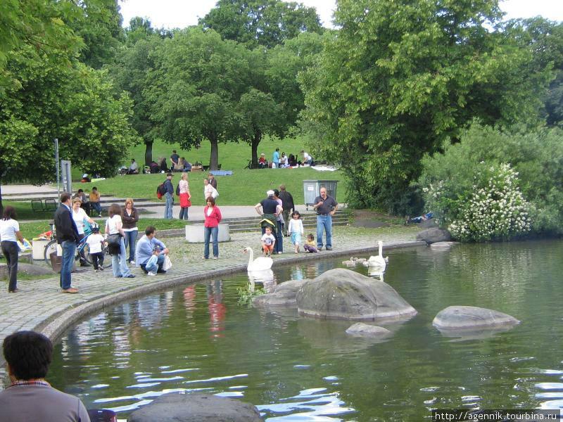 Население Мюнхена кормит лебедей, не смотря на предупреждающие надписи на берегу
