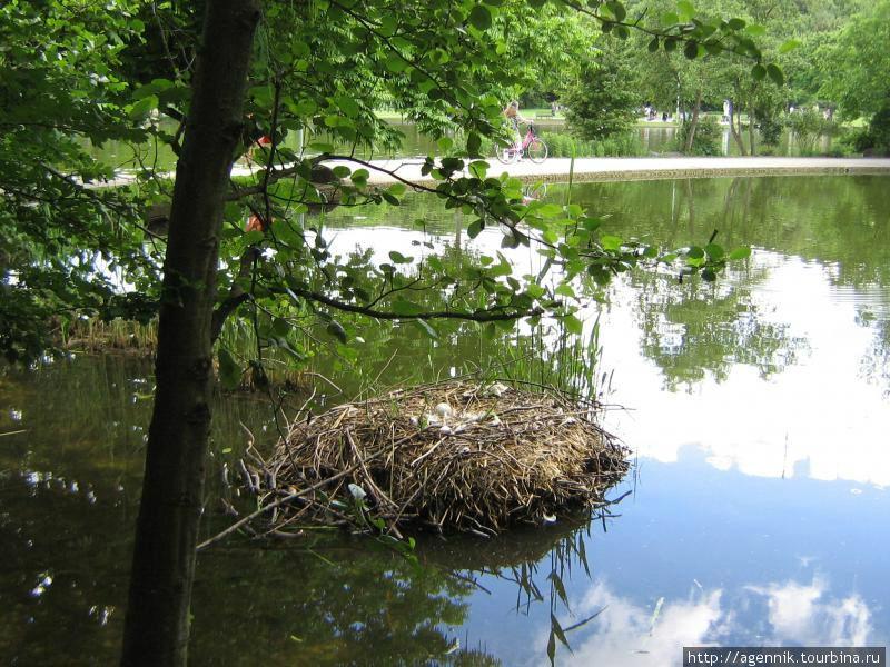 Гнездо лебедей