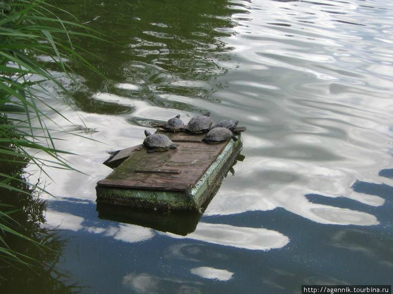 Черепахи возле пагоды — интересно, что они делают зимой