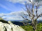 Вершина Круглой сопки — самой высокой точки хребта Алабия