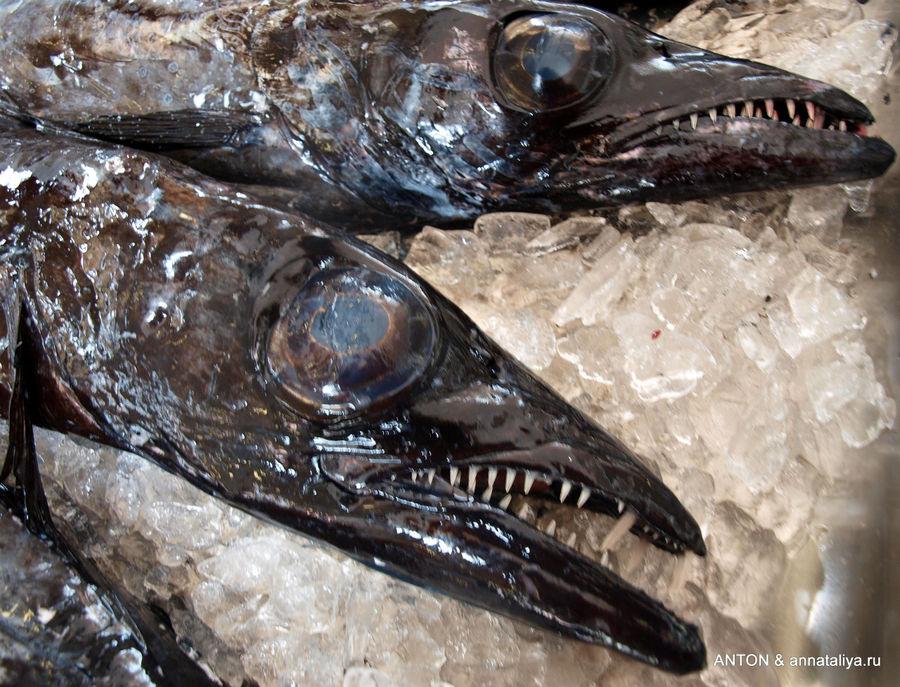 Рыба-сабля на рынке в Фуншале.