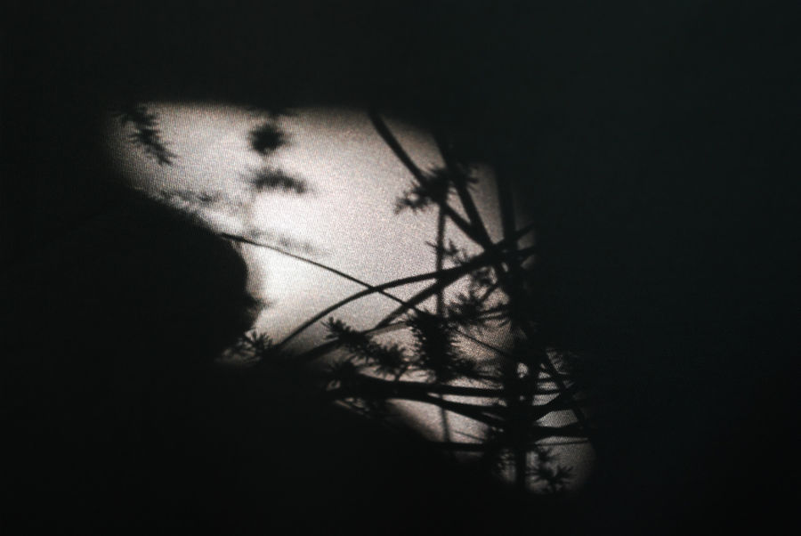 Ночной лягушатия