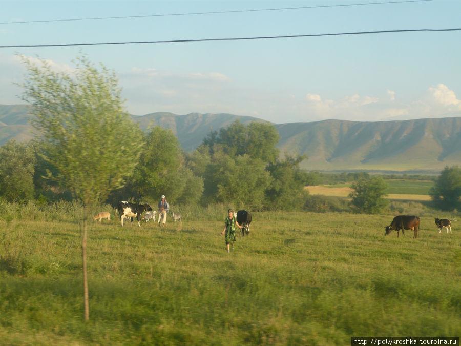По дороге в Джамбул (Тараз). Южный Казахстан в своей красе