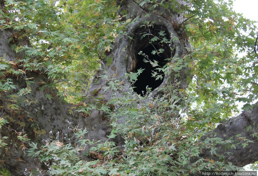 Вот оно — дерево