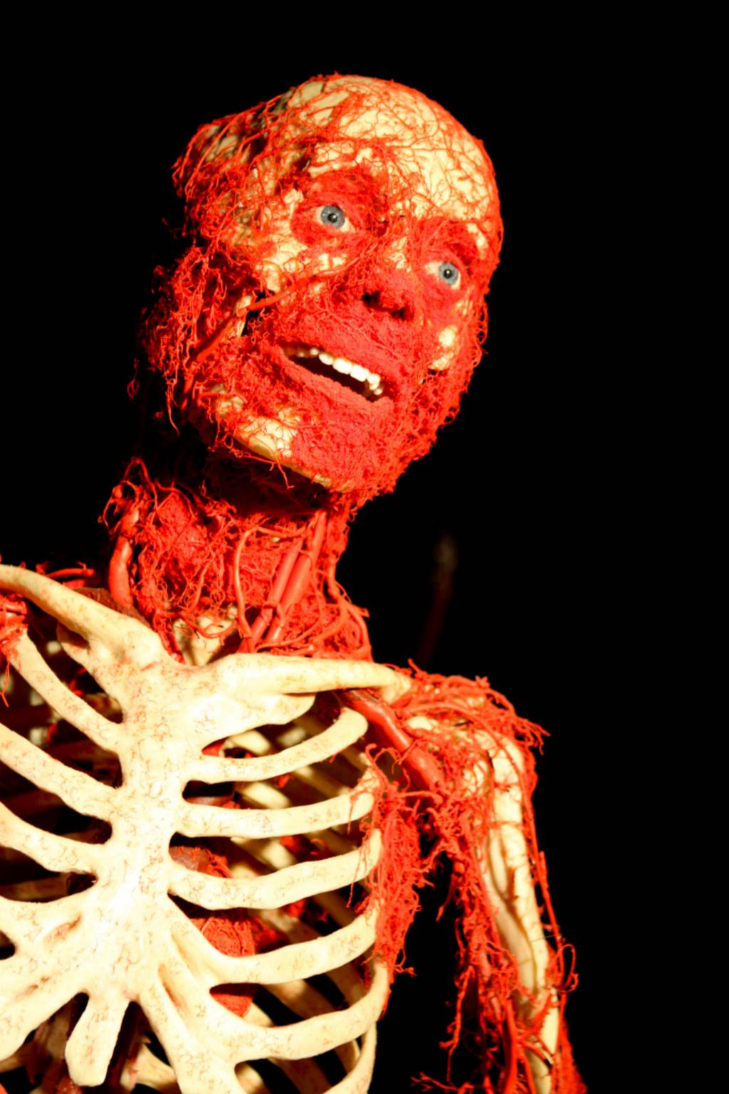 Сучки кожа и кости 18 фотография