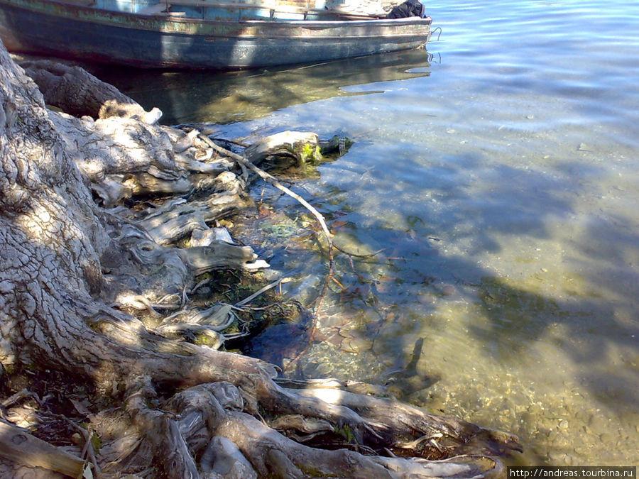 У Охридского берега