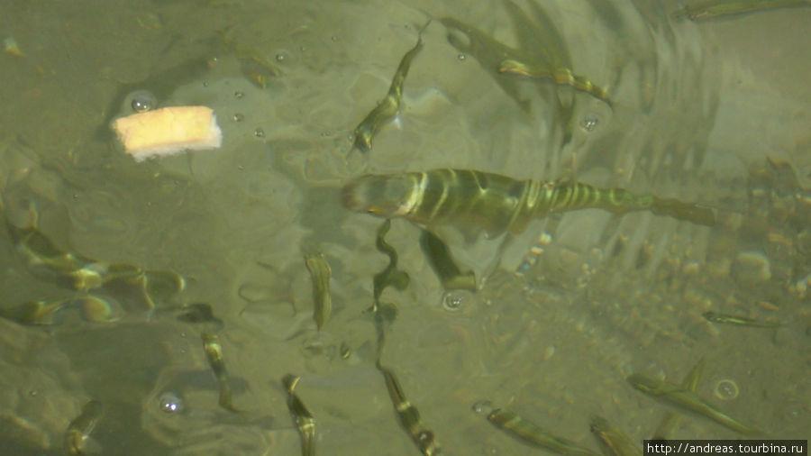 Мы кормили рыбок
