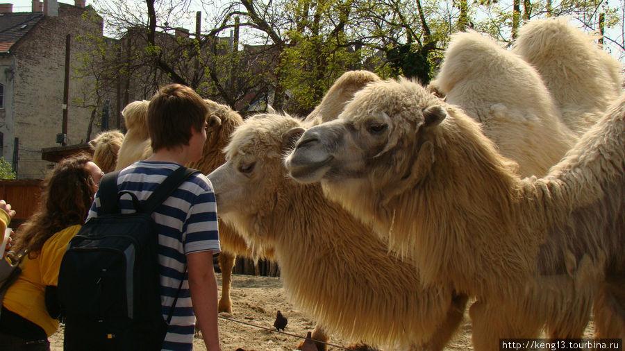 Картинки по запросу будапешт зоопарк