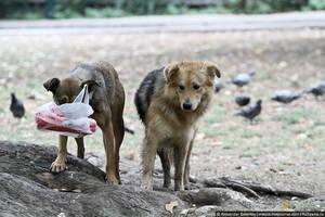 В Сараево бродит очень много бездомных животных, но все они очень дружелюбные, а собаки все помечены.