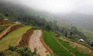 12. Рисовое хозяйство — коллективное. Коллективно надо заботиться о воде на полях и о посадке.   Вот четыре террасы. Та, где буйно зеленеют рисовые ростки, предназначена для рассады . Это молодой, только взошедший рис. На террасе над ней он уже весь выщипан и пересажен на новые поля. На самой нижней террасе идет его пересадка, а вот  верхняя терраса уже посаженное рисовое поле.  Молодые ростки сохраняют дистанцию в, приблизительно, 5 см друг от друга.  Терраса посередине — уже пересаженное поле. В большинстве случаев, те поля что взрастили молодой рис, отдыхают сезон.